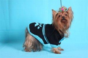 Йоркширский терьер относится к карликовой породе собак, а поэтому нуждается в постоянном уходе и тепле, для чего ему необходима вязаная одежда, например, свитер. Отвечая на вопрос, а как связать свитер для йорка, следует заметить, что такая вязаная вещь не только украсит питомца, но и реально поможет ему в холодную погоду.
