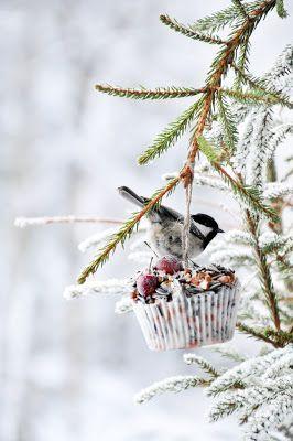 Quelques graines et un peu de graisse ou comment nourrir les oiseaux au jardin en hiver.