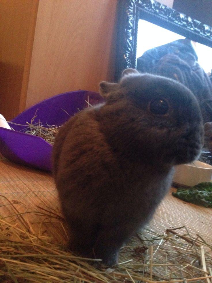 where is my carrottt