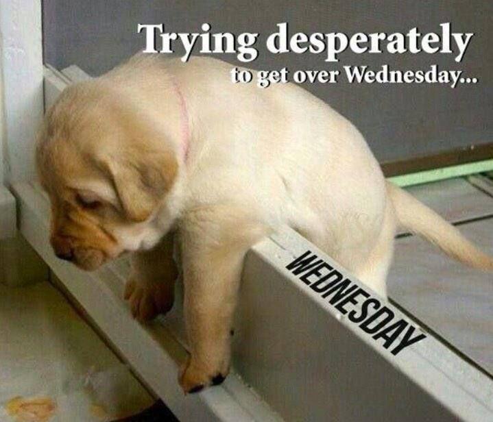 Happy Hump Day Wednesday Memes Work Memes Wednesday Humor