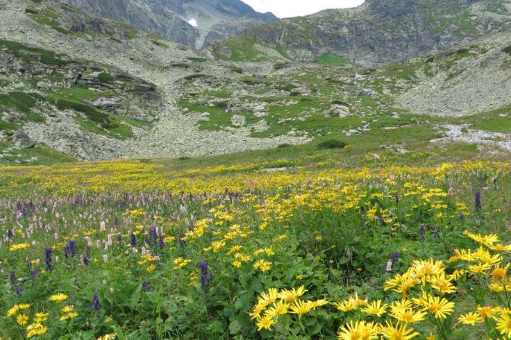 Kvetnica - Velická dolina