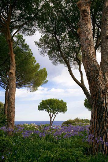 paolo pejrone / giardino in isola d'elba