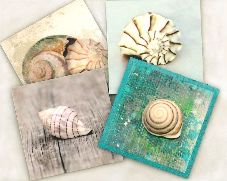 109 best images about shells on pinterest conch shells for Seashell art projects