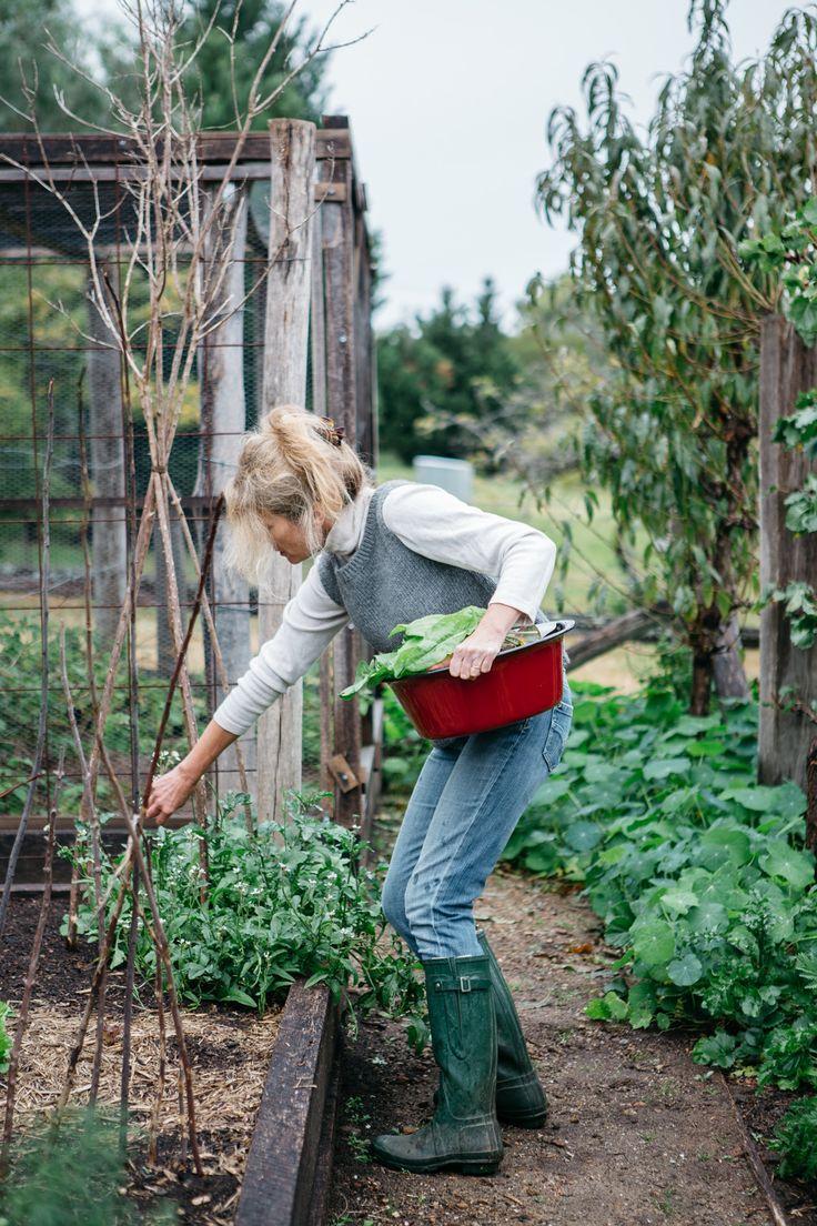 Récolter les fruits et légumes dans le potager