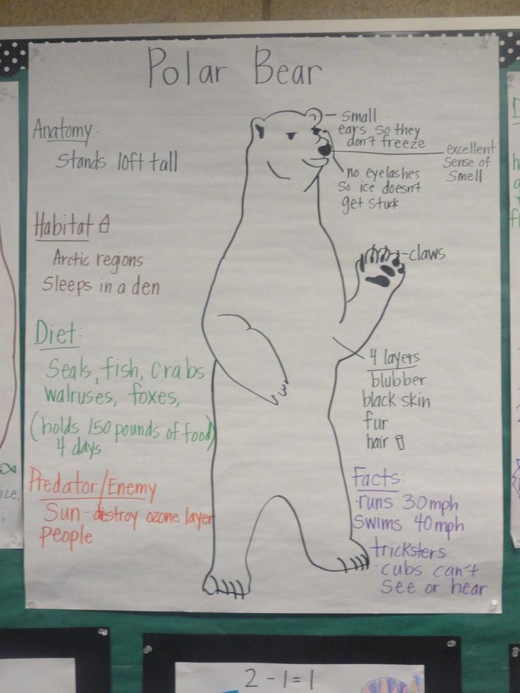 Bear Unit: Polar Bear Pictorial Input Chart