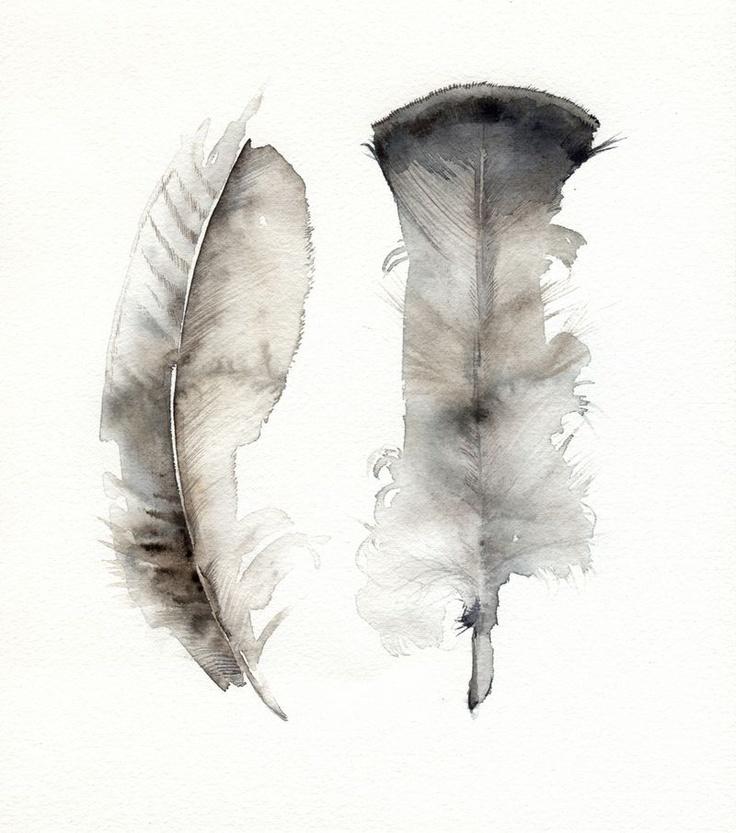 turkey feathers / amber alexander illustration