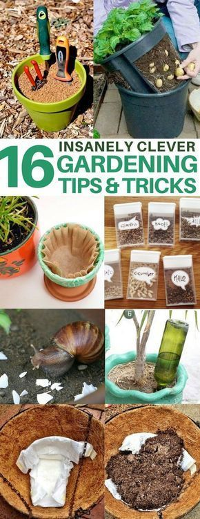 I can use these genius gardening tips when planting my garden to keep out the snails and to feed the soil with banana peels! gardening tips, gardening hacks, gardening for beginners