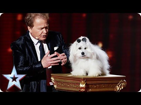 Marc Métral and Miss Wendy wow the crowd | Semi-Final 4 | Britain's Got ...  (5-28-2015) (AWESOME DOG!! : )