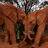 Elephants can read a person's heart and mind, so it is important that such affection is sincere and not just a facade.