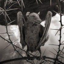 На этот раз разговор пойдет не о каком-то конкретном художнике или мастере, а о природе. В вопросе творчества у природы есть определенное преимущество. Она творит без эмоций, и ее не посадят в тюрьму за жестокое обращение с животными.  Я говорю об озере Натрон (Natron), которое благодаря своему химическому составу превращает павших в него птиц в произведение искусства. Жестоко? Наверное нет. Жестокость - это эмоция, а у природы нет эмоций. Они убивает животных просто так. #NickBrandt #AleSav