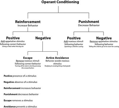 Operant conditioning: Behavior is modified by antecedents & consequences (ABC's).  +/- Reinforcements & Punishments.