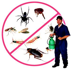 Australian pest management system is your one stop solution for all your pest related problems