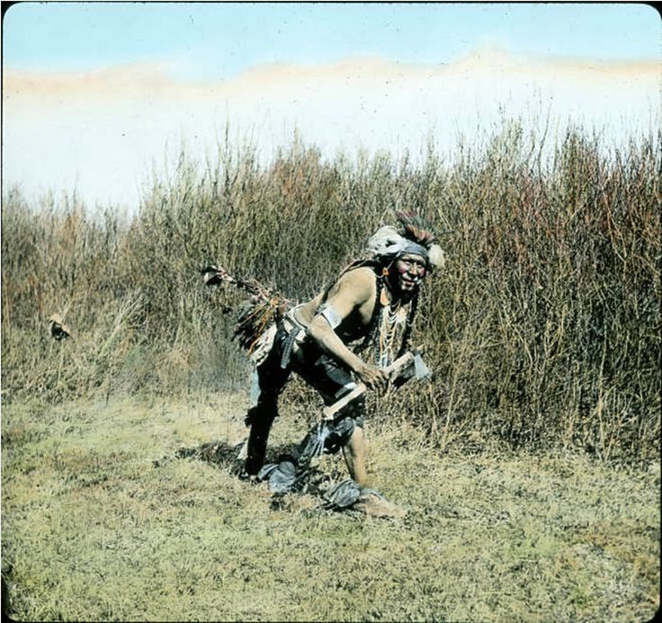 Montana Native Plants: 1074 Best Images About Crow And Native American Photos On