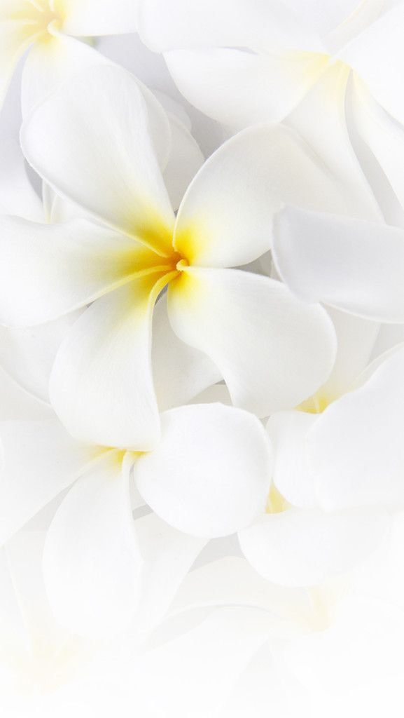 Plumeria Flower Free Iphone Wallpaper Silver Spiral HD Wallpapers Download Free Images Wallpaper [1000image.com]