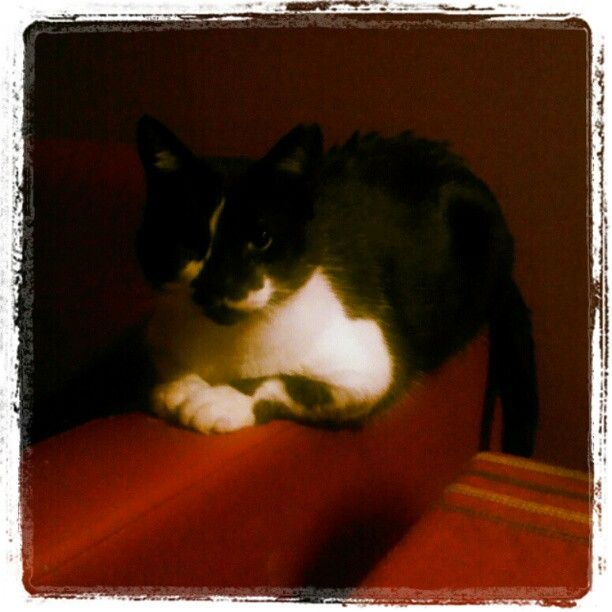 """Koshirosky #cat"" Photo by 8bitboo on Instagram"