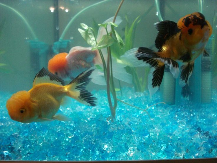 17 best images about dream aquariums on pinterest for Dream of fish tank