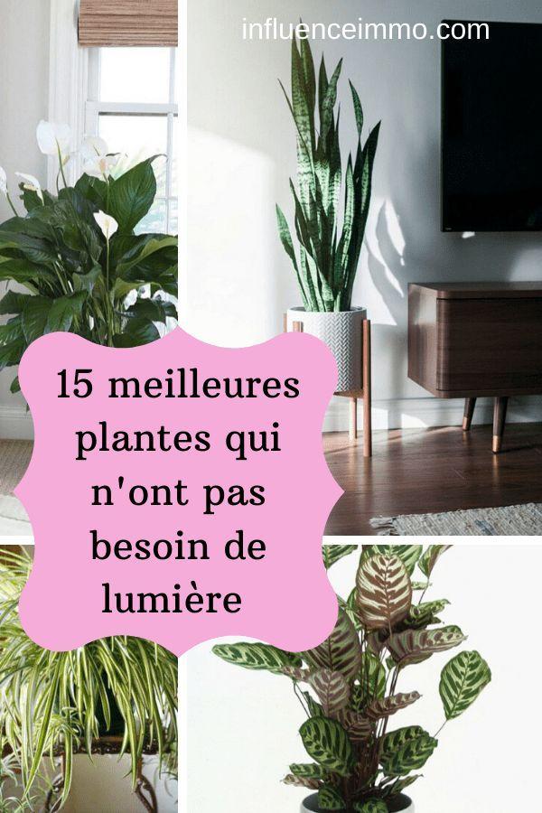 Les 15 Meilleures Plantes Qui Poussent Sans Lumiere Decoration