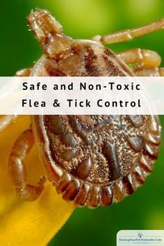 Best Natural Flea and Tick Treatment for Dogs | Natural Flea Control for Dogs. Dog flea treatments like Advantage Flea Control and Frontline Flea Medicine are two that come to mind. But are these topical flea products safe? According to theU.S. Environmental Protection Agency, there are some dangers and risks. Some side effects can include rashes, vomiting, diarrhea, seizures, and even death.