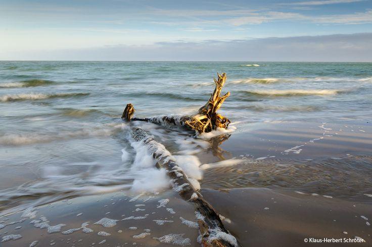 Hohe Düne. ©Klaus-Herbert Schröter #zingst #meer #ostsee #strand #strandurlaub #zingstde