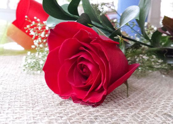 a single perfect red rose is the perfect expression of i love you