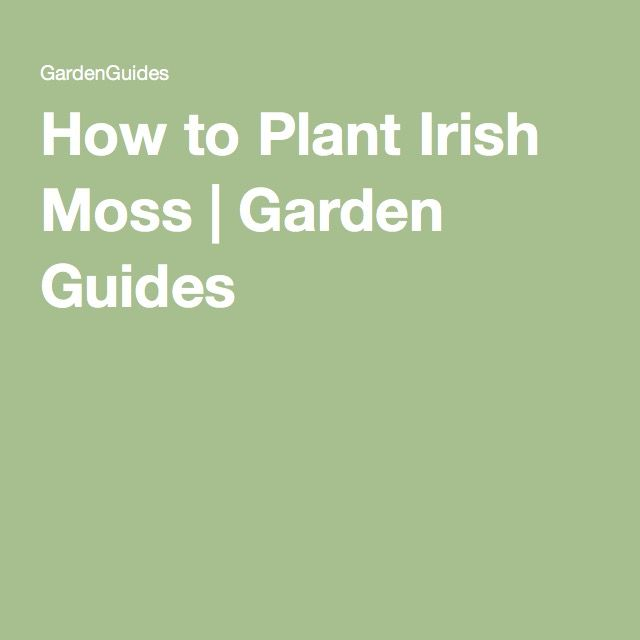 How to Plant Irish Moss | Garden Guides                                                                                                                                                      More
