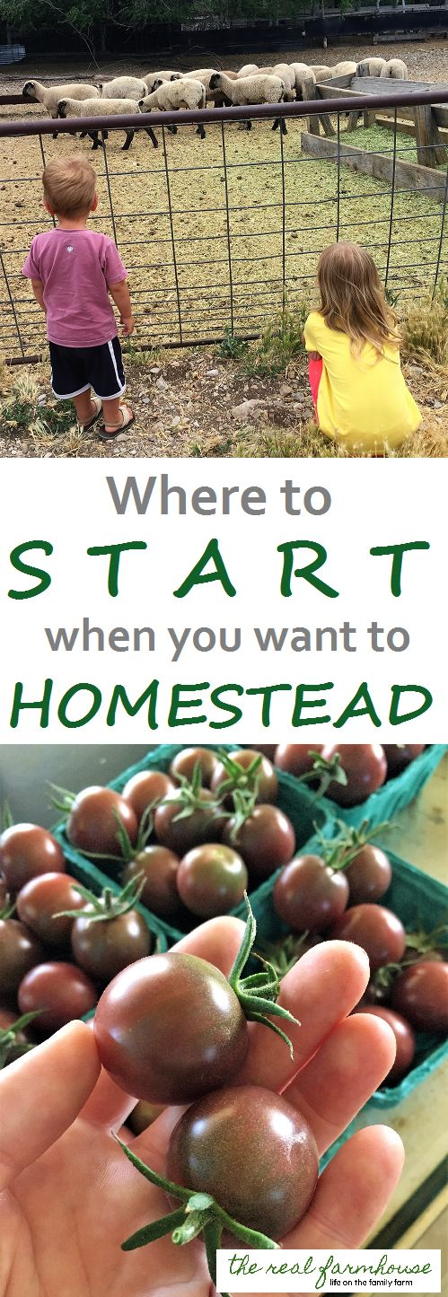Where to start when you want to homestead. 10 steps to homesteading, on the cheap