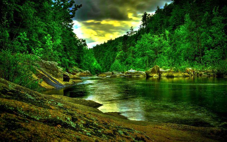 Rainforest Wallpaper 1080p #tjz