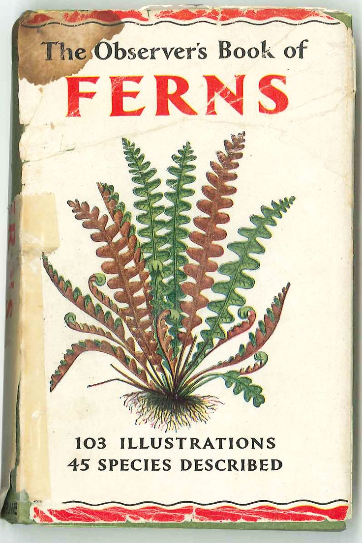 Introduction to Cold Hardy Tree Ferns