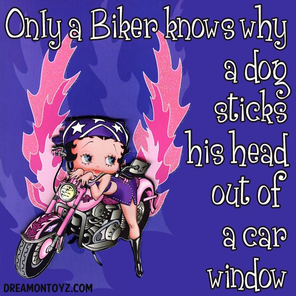 Only a Biker knows why a dog sticks his head out of a car window ~ For more Biker Betty pictures, go to: http://bettybooppicturesarchive.blogspot.com/search/label/Biker%20Betty or on Facebook https://www.facebook.com/media/set/?set=a.571137836233401.145020.157123250968197&type=3