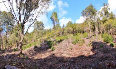 foresta di pixinamanna - Cerca con Google