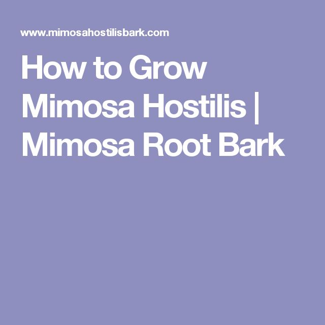 How to Grow Mimosa Hostilis | Mimosa Root Bark