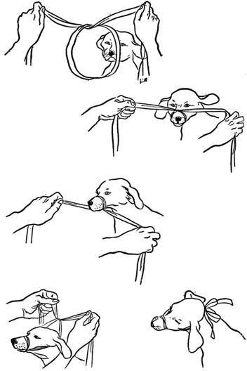 How to make a gauze muzzle. So helpful!
