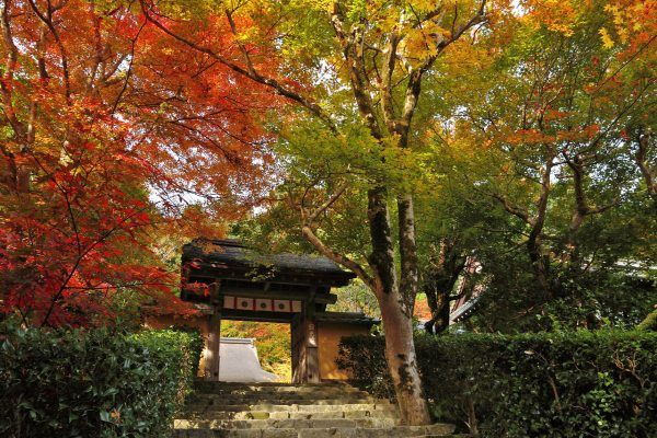 愛知県犬山市のもみじ寺「寂光院」で絶景の紅葉と歴史を楽しもう!