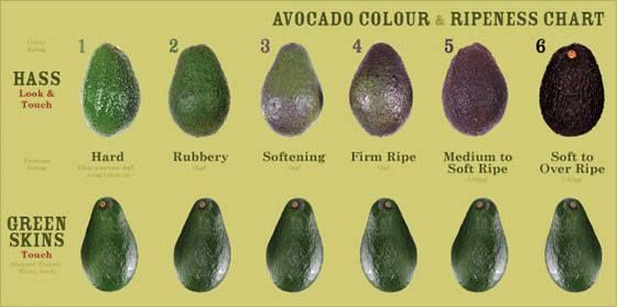 Avocado Ripening Chart Food And Cooking 411 Pinterest