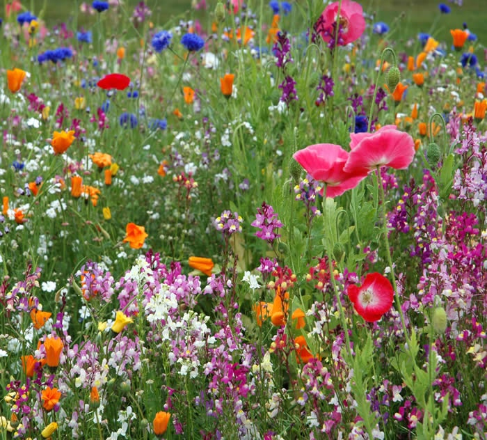 188 best Wildflowers Natures Beauty images on Pinterest