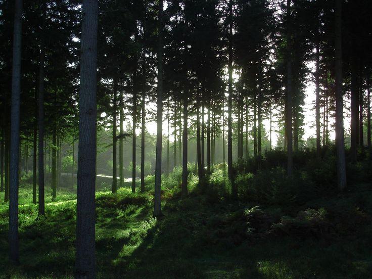 Sheerwood forest, Nottingham.