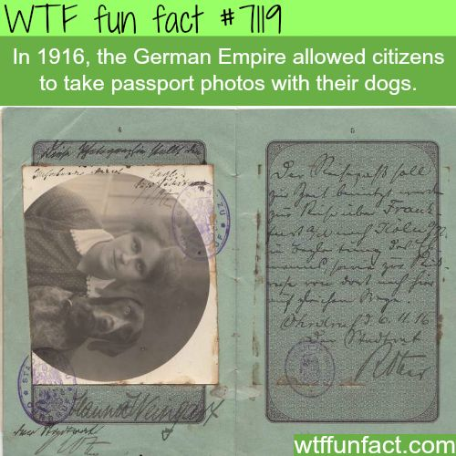 Passport photos with your dog - WTF fun facts