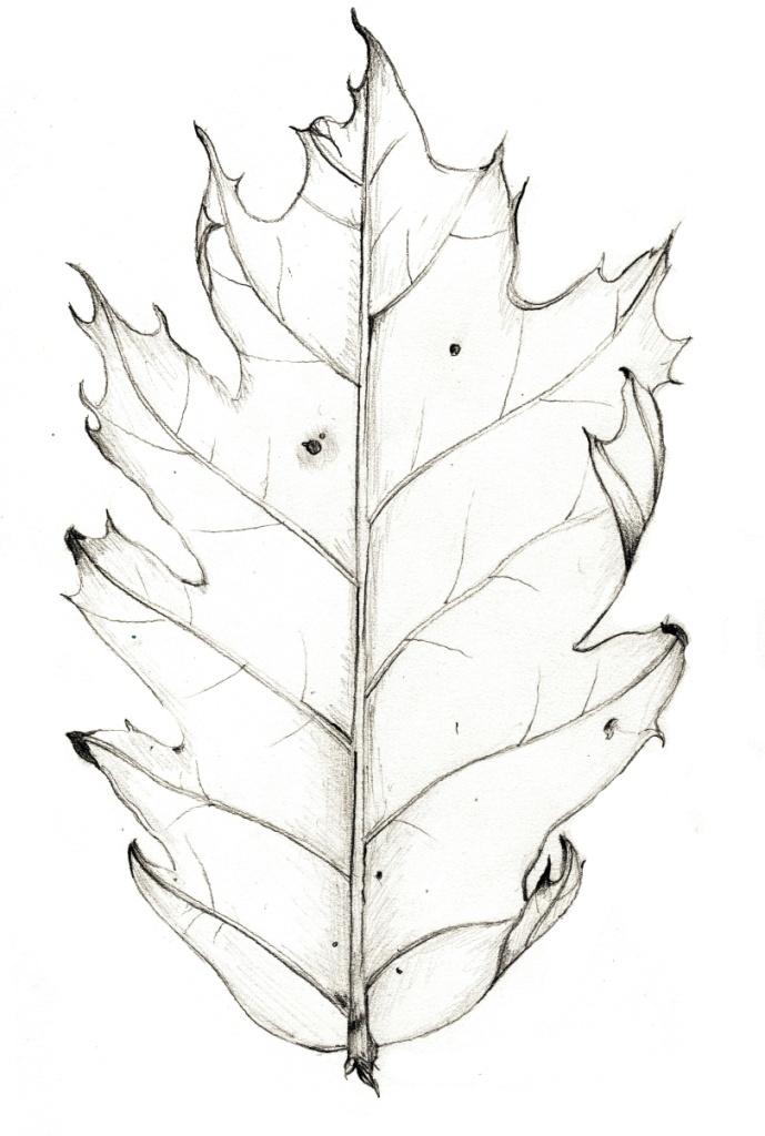 Oak Leaf  www.kelliecox.com
