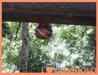 I love #Corniolo Giardino Botanico di Valbonella … abitare a testa in giù … roba da #Chiocciola!