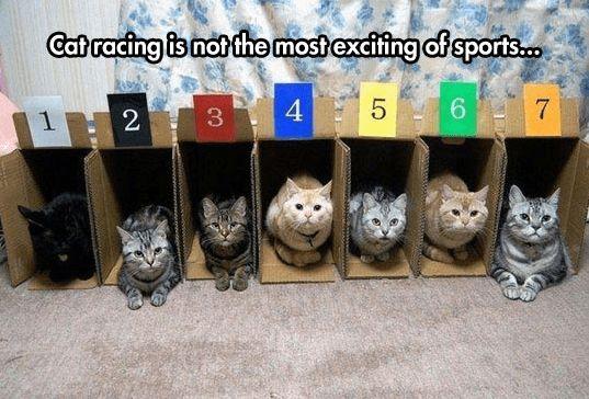 Cat Racing http://ibeebz.com