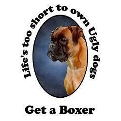 Beautiful and smart! #Boxer