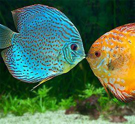 Acuario en Bogota | Venta de peces ornamentales en Bogota | venta ...