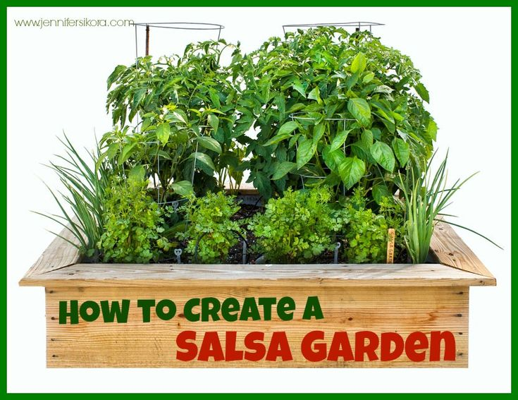 How to Create a Salsa Garden - Jen's Journey