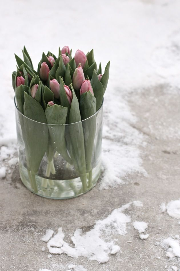 Tulips in round vase - i wanna do this