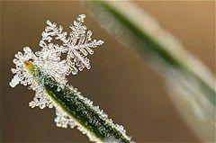 Snow, up close
