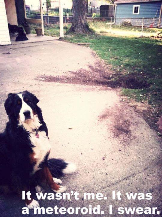 best of dog shaming 8 540x723