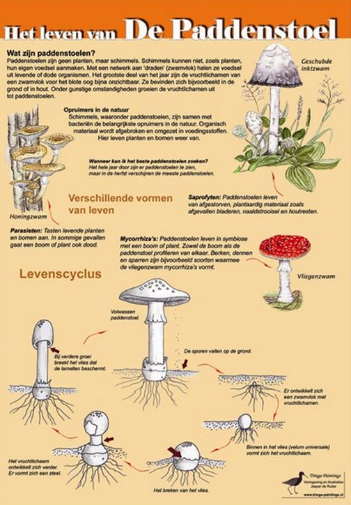 Alles over paddenstoelen