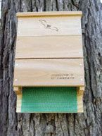Free Plans for Bat Houses (They can eat about 1000 mosquitos a night!)