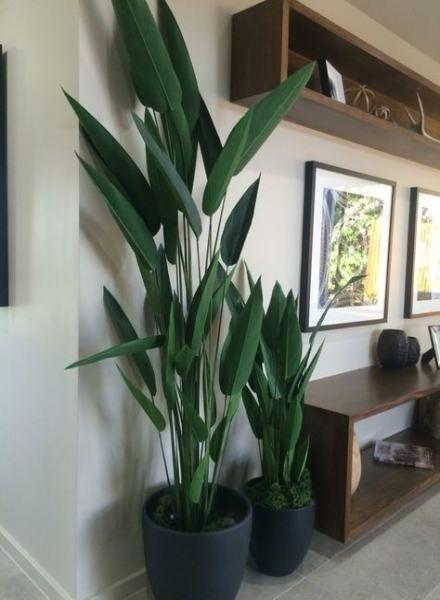 15 Trendy Plants Appartement Living Rooms Plants Plant