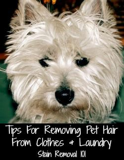 Tips and tricks for removing pet hair from clothes and laundry {on Stain Removal 101}